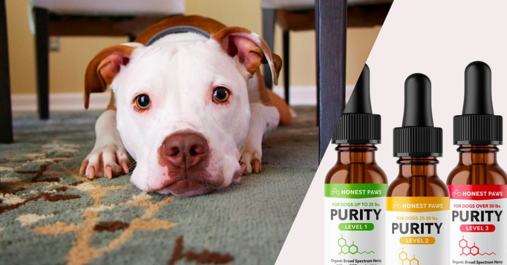 9 Courses You Potentially Can Be Showed From Bing Concerning Cbd Oil For Pets Uk Amazon
